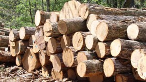 Лесные материалы